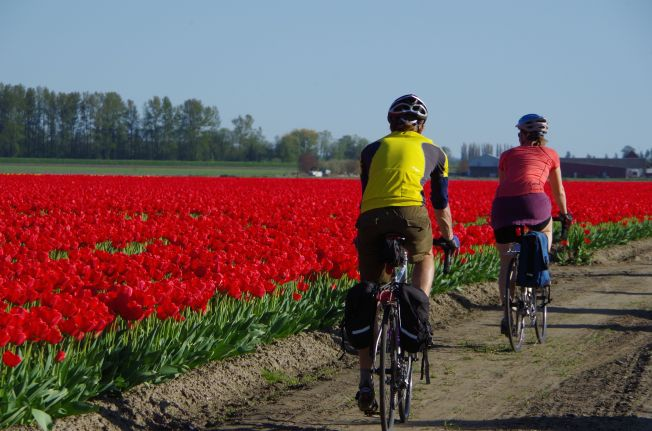 Cycling the tulips